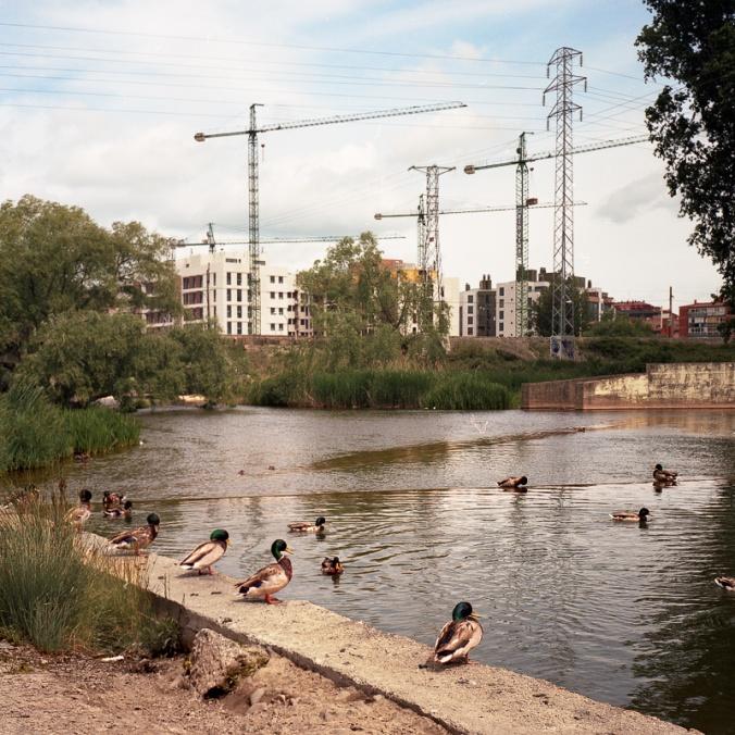 ducks_cranes